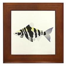 Highbacked Headstander tropical fish Framed Tile