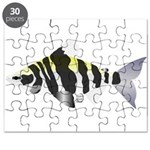 Highbacked Headstander tropical fish Puzzle