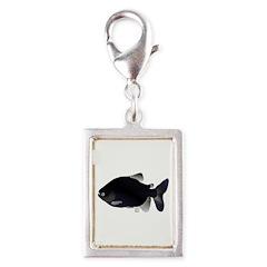 Black Pacu fish tropical Amazon Silver Portrait Ch
