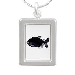 Black Pacu fish tropical Amazon Silver Portrait Ne