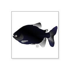 Black Pacu fish tropical Amazon Square Sticker 3