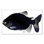 Black Pacu fish tropical Amazon Sticker (Rectangle