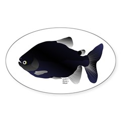 Black Pacu fish tropical Amazon Sticker (Oval)