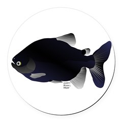Black Pacu fish tropical Amazon Round Car Magnet