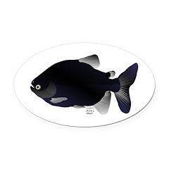 Black Pacu fish tropical Amazon Oval Car Magnet