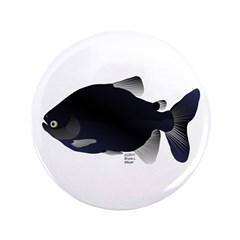 Black Pacu fish tropical Amazon 3.5