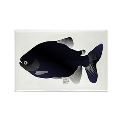 Black Pacu fish tropical Amazon Rectangle Magnet (
