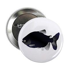 Black Pacu fish tropical Amazon 2.25