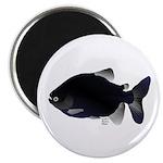 Black Pacu fish tropical Amazon Magnet