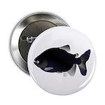 "Black Pacu fish tropical Amazon 2.25"" Button"