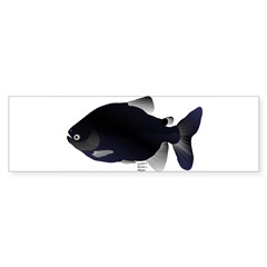 Black Pacu fish tropical Amazon Bumper Sticker