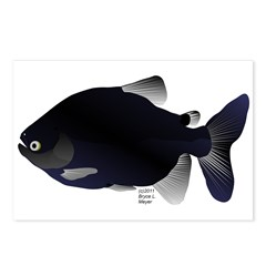 Black Pacu fish tropical Amazon Postcards (Package