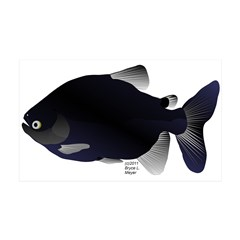 Black Pacu fish tropical Amazon Wall Decal