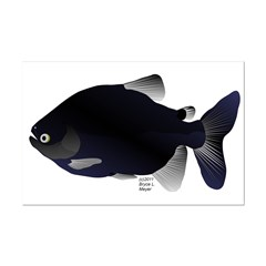 Black Pacu fish tropical Amazon Posters