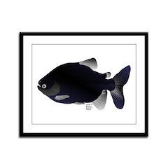 Black Pacu fish tropical Amazon Framed Panel Print