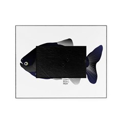 Black Pacu fish tropical Amazon Picture Frame