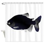 Black Pacu fish tropical Amazon Shower Curtain