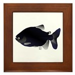 Black Pacu fish tropical Amazon Framed Tile