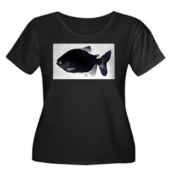 Black Pacu fish tropical Amazon T
