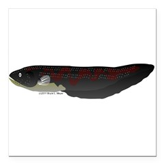 Electric Eel (Knifefish fish) Square Car Magnet 3