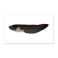 Electric Eel (Knifefish fish) Rectangle Car Magnet