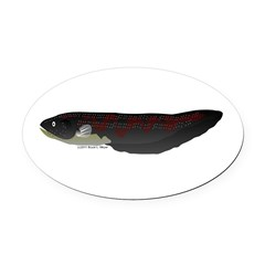 Electric Eel (Knifefish fish) Oval Car Magnet