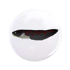 Electric Eel (Knifefish fish) 3.5