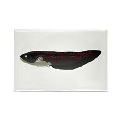 Electric Eel (Knifefish fish) Rectangle Magnet (10