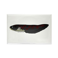 Electric Eel (Knifefish fish) Rectangle Magnet