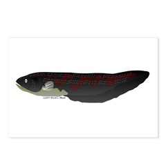 Electric Eel (Knifefish fish) Postcards (Package o