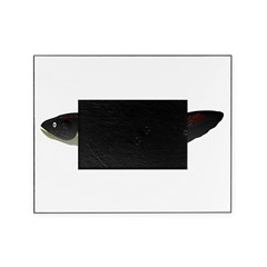 Electric Eel (Knifefish fish) Picture Frame