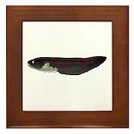 Electric Eel (Knifefish fish) Framed Tile