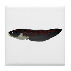 Electric Eel (Knifefish fish) Tile Coaster