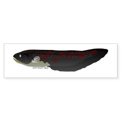 Electric Eel (Knifefish fish) Bumper Sticker
