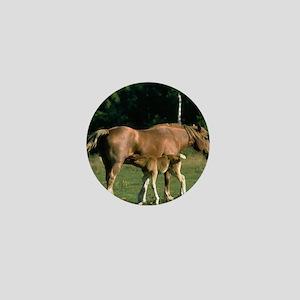 Nursing Foal Mini Button