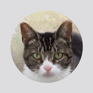 Tabby Cat Stare with Green Eyes Ornament (Round)