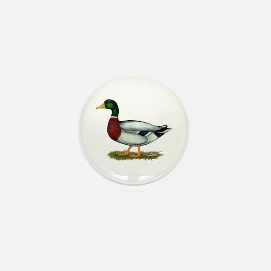 Mallard Duck Drake Mini Button