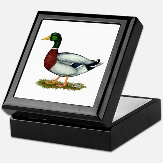 Mallard Duck Drake Keepsake Box