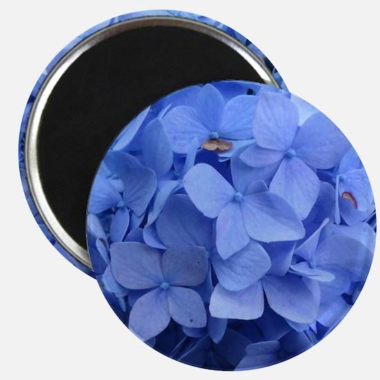 Blue Violet Hydrangea Magnets