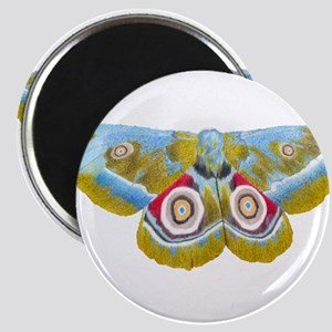 Colourful Moth Magnets