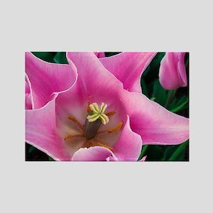 Tulip Rectangle Magnet