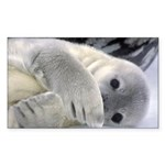 Seal Pup Antarctica Rectangle Sticker