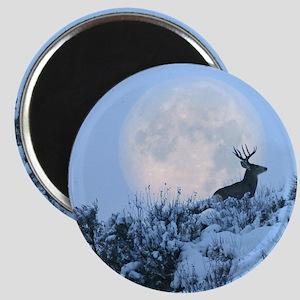 Buck deer moon Magnet