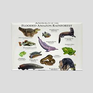 Animals of the Flooded Amazon Rainforest Rectangle