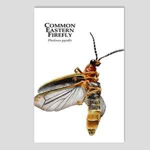 Common Eastern Firefly Postcards (Package of 8)