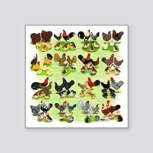 "16 Chicken Families Square Sticker 3"" x 3"""
