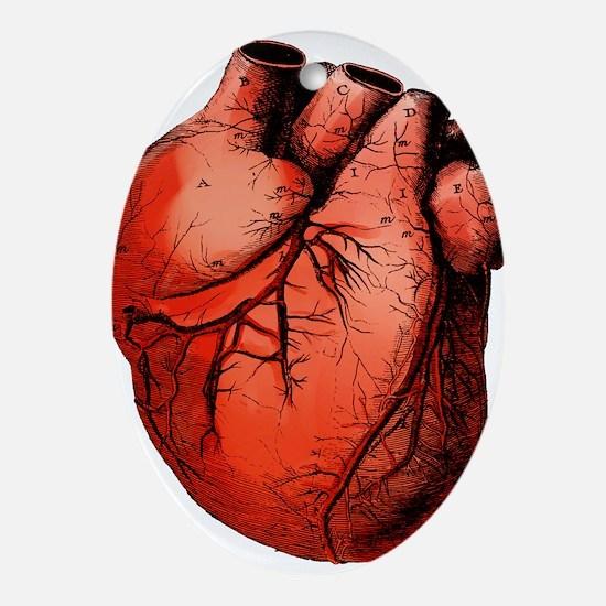 Human Heart Ornament (Oval)
