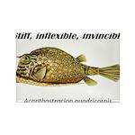 Stiff Fish Rectangle Magnet (100 pack)