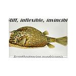 Stiff Fish Rectangle Magnet