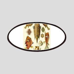 Acanthostracion quadricornis Patches